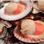conchas de abanico