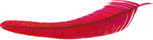 PLUMAtrns